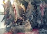 La Guardia Civil de Huesca interviene más de 11 toneladas de carne de caza en el Alto Gállego