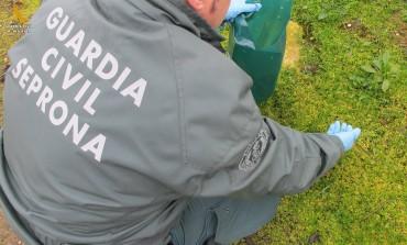 La Guardia Civil interviene 550 Kilos de productos ilegales para su impregnación en semillas