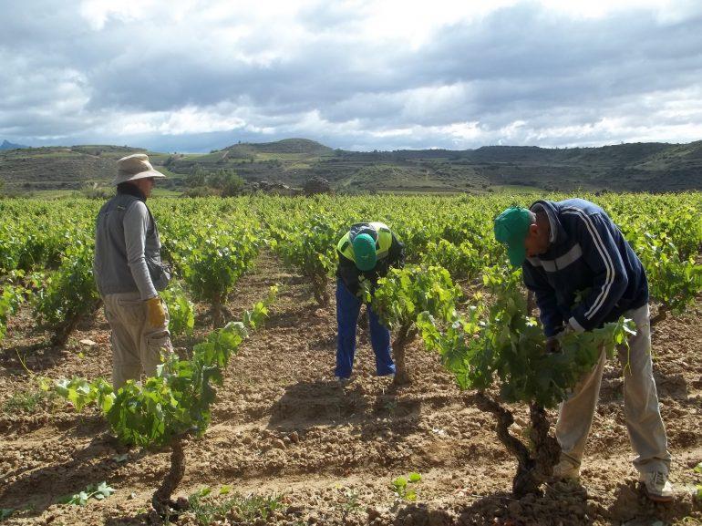 Los agricultores del Bajo Cinca protestan por el precio de la fruta