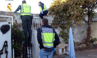 Dos detenidos por el cultivo de plantaciones de marihuana en terrazas particulares
