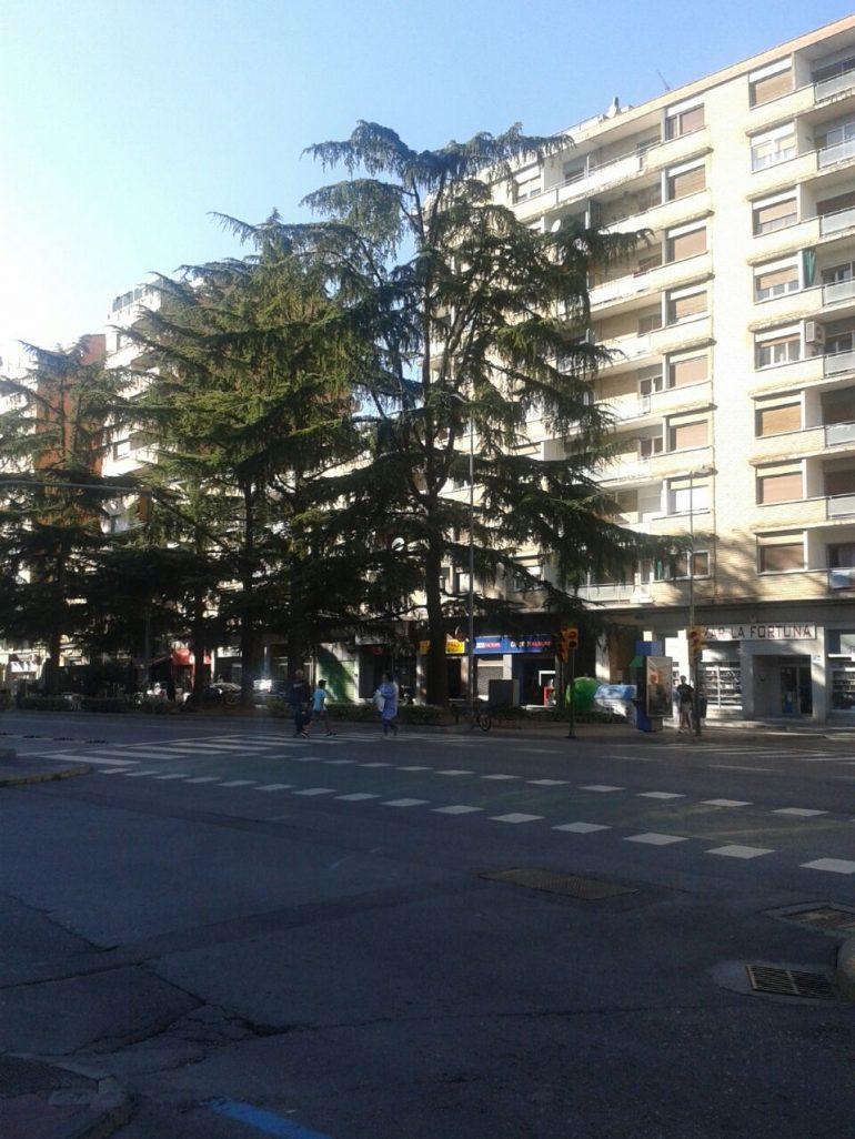 Ecologistas en Acción se posiciona sobre la posible tala de cedros en la Avenida Ramón y Cajal