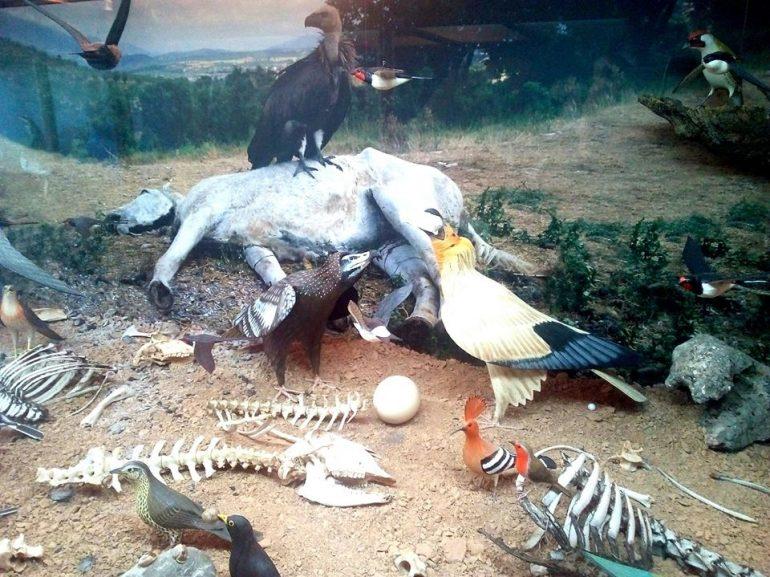 El Fondo Amigos del Buitre y la Asociación de Empresarios de Guara reunirán el próximo fin de semana en Panzano a más de un centenar de aficionados a la ornitología