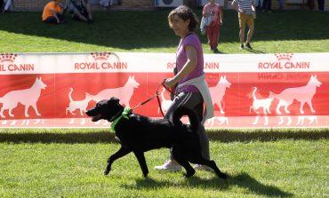 Más de 40 razas y más de 100 perros han protagonizado el IV Evento Canino celebrado hoy en Brotalia