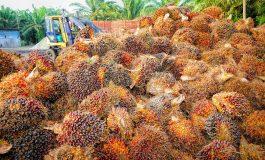 La UE reconoce el biocombustible de aceite de palma como insostenible pero no logra reducir su subsidio y la deforestación asociada