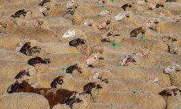 Loporzano SIN Ganadería Intensiva denuncia de nuevo en Bruselas la amenaza de la ganadería industrial para el medio rural