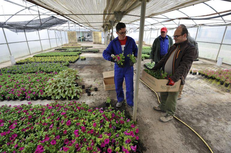 Más de 70 ayuntamientos ya han recogido las flores que lucirán en una nueva Campaña de la Flor de la DPH