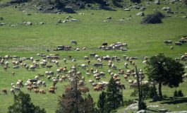 Internet, el mejor escaparate para los productores locales del Pirineo aragonés