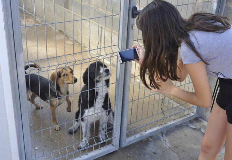 Ya son más de 200 los perros adoptados este año desde el centro de la DPH con más salidas internacionales