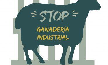 Organizaciones ecologistas y población afectada por la ganadería industrial porcina rechazan la nueva legislación para su regulación