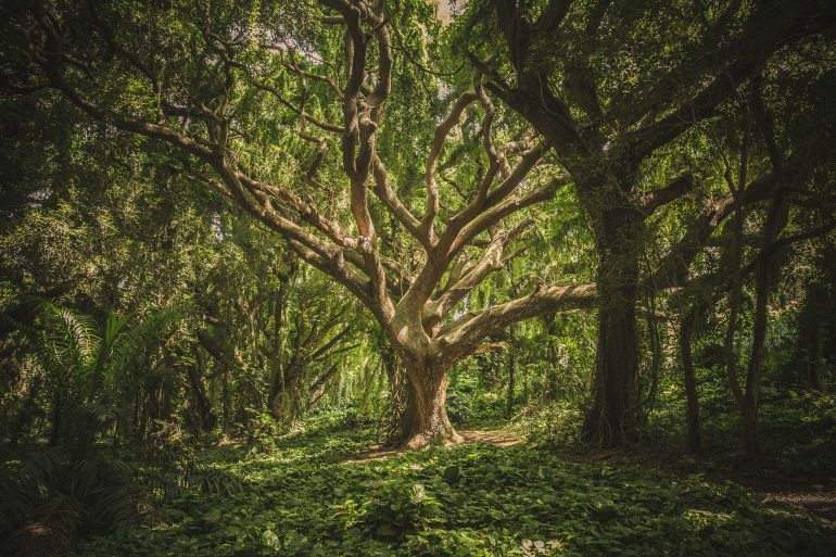 Propuestas ambientales de las organizaciones ecologistas para los primeros 100 días del Gobierno