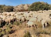 Aragón recibirá un complemento a la PAC de 924.281 € para los ganaderos
