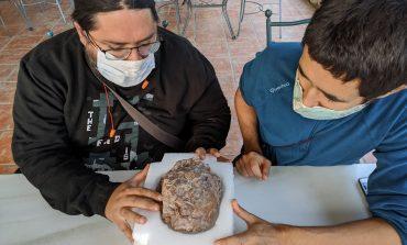 Descubierto en Loarre uno de los mayores yacimientos de huevos de dinosaurio del mundo