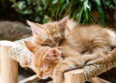 Namtaru, los gatos y las rimas de la historia