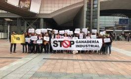 Loporzano SIN Ganadería Intensiva considera urgente una moratoria a la ganadería industrial a nivel estatal