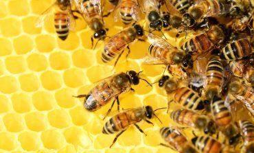 UAGA valora como desastrosa la campaña de la miel
